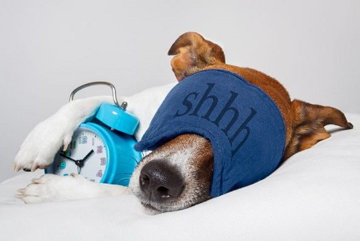 10 Ways to Maximize Your Power Nap